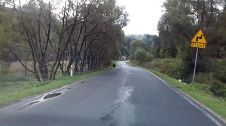 Jedziesz sobie spokojnie w Bieszczady, a tu taka niespodzianka na drodze