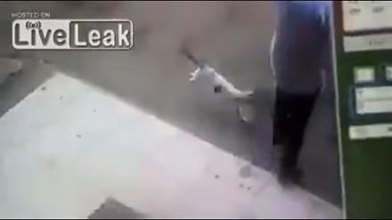 Szalony kot atakuje mężczyznę na ulicy