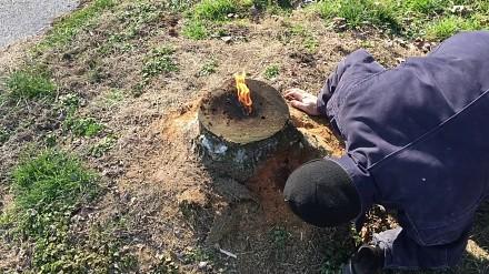 Jak w prosty sposób pozbyć się pnia po ściętym drzewie?