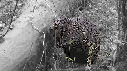 Bliżej natury - poznaj lepiej bobra