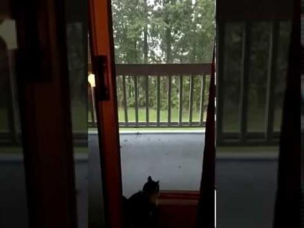 Kiedy jesteś kotem i oglądasz burzę za oknem