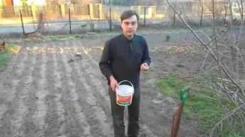 Pół miliona złotych z połowy hektara na przykładzie czosnku