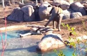 Gęś kontra słonik - recenzuje Ozzy