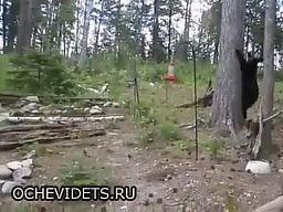 Czelabiński kot obronny