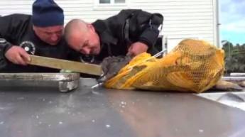 Zmagania rosyjskiego nurka z agresywną rybą