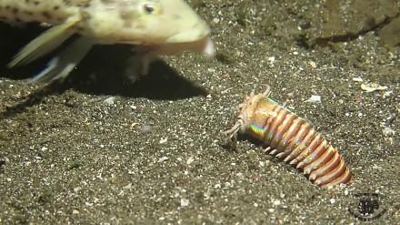 Pamiętacie film Wstrząsy? Takie potwory istnieją i żyją na dnie oceanu