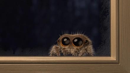 Mały słodziutki pajączek powraca! Na zewnątrz jest zimno!