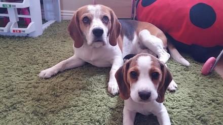 Kto nasikał na dywan?