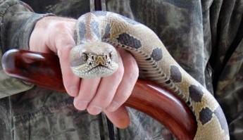 Realistycznie wyglądający wąż wyrzeźbiony w drewnie