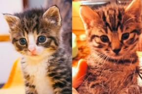 7 lat w 7 minut z dwoma kotami - Bobo i Nikitą