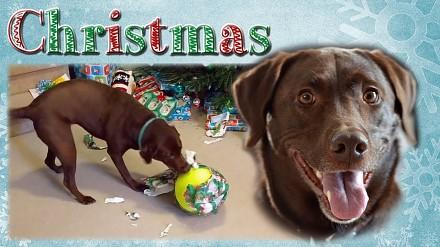 Pies dostał wymarzony prezent pod choinkę