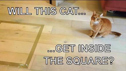 Jak umieścić kota w jednym miejscu w domu?