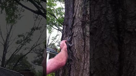 Amerykańska rodzina ratuje małą wiewiórkę