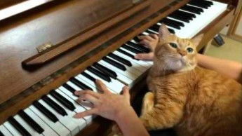 Kot meloman i jego pasja do Chopina