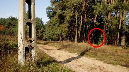 Czarna seria zaginięć w tajemniczym lesie trwa!