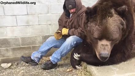 """""""Mój przyjaciel niedźwiedź"""" w rzeczywistości"""