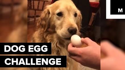 Czy twój pies potrafi wziąć jajko do pyska i go nie rozbić?