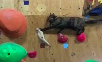 Kot, który w sercu ma wspinaczkę