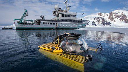 Antarktyka 1000m pod powierzchnią wody tętni życiem
