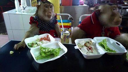 Małpki jedzą na mieście