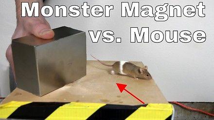 Czy wielki magnes neodymowy przesunie mysz?