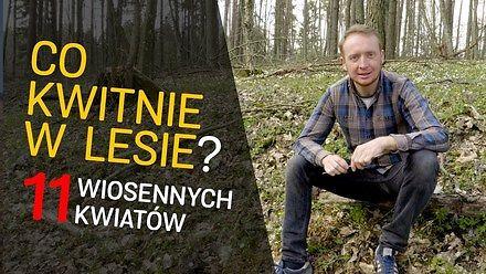 Co teraz kwitnie w lesie? - czyli jak błysnąć na spacerze - o Lesie #23