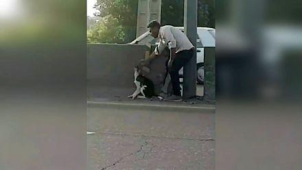 Mężczyzna ratuje psa na autostradzie