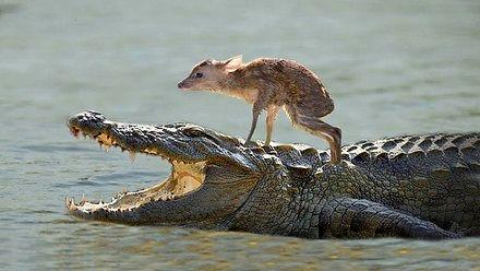 Pies i sarna, czyli zwierzęta, które ratują inne zwierzęta