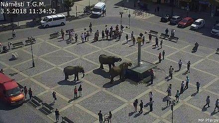 Słonie wyszły z cyrku na spacer po mieście w Czechach