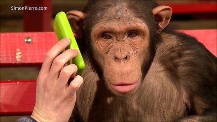 Kiedy pokazujesz małpom magiczne sztuczki