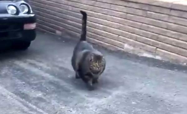 Czelabiński kotecek