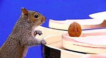Tresowanie wiewiórek do filmu zamiast efektów CGI