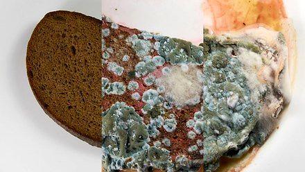 Pleśniejący chlebek - przypominajka przed początkiem wakacji