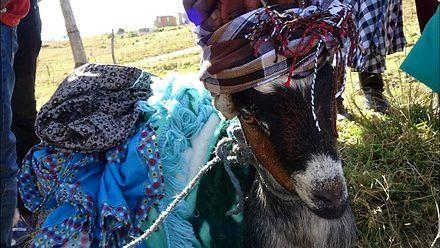 Howick Falls i zakup żony w zuluskiej wiosce