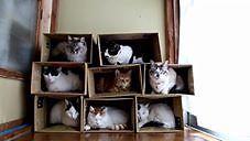 Masz osiem kotów w domu? Zbuduj dla nich tani domek