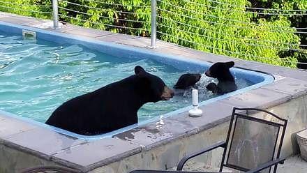 Niespodziewani goście w basenie