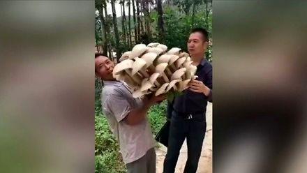 Orgazm grzybiarza - dwudziestokilogramowa grzybnia