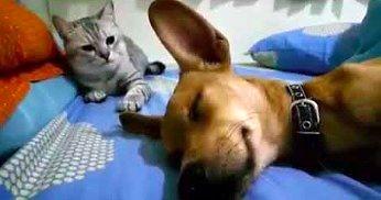 Kiedy zasnąłeś przy lasce i przez sen puszczasz bąki