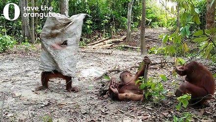 Żądny uwagi małpiszon