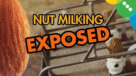 Jak powstaje mleko migdałowe?