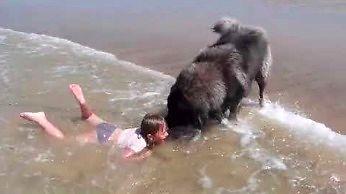Pies ratownik wyciąga dziewczynkę z fal