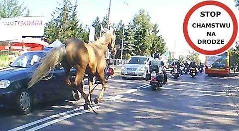 Z drogi śledzie, koń biegnie!