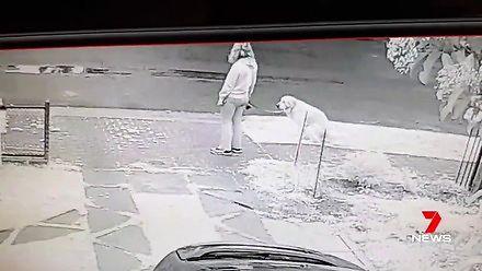 Zmęczyły go psie kupy na trawniku, więc zainstalował kamerę i...