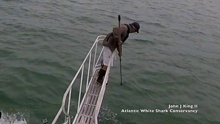 Rekiny są nieobliczalne