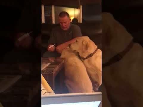 Drugi pies też chce być zdrowy, więc bierze leki