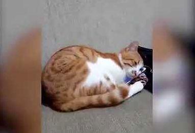 A mówią, że koty nie mają uczuć