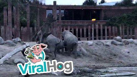 Facet wskoczył na wybieg dla słoni w zoo