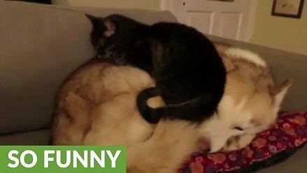 Ulubione miejsce do spania dla kota? Pies