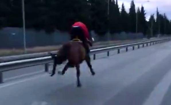 Szalony koń biegnie po asfalcie