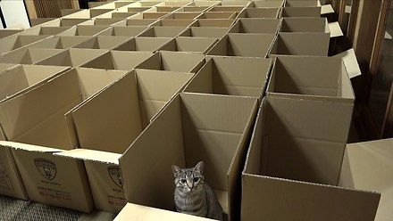 To tu koty trafiają po śmierci
